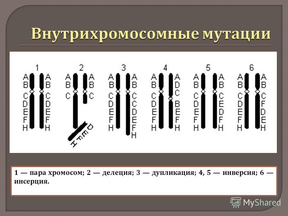 1 пара хромосом ; 2 делеция ; 3 дупликация ; 4, 5 инверсия ; 6 инсерция.