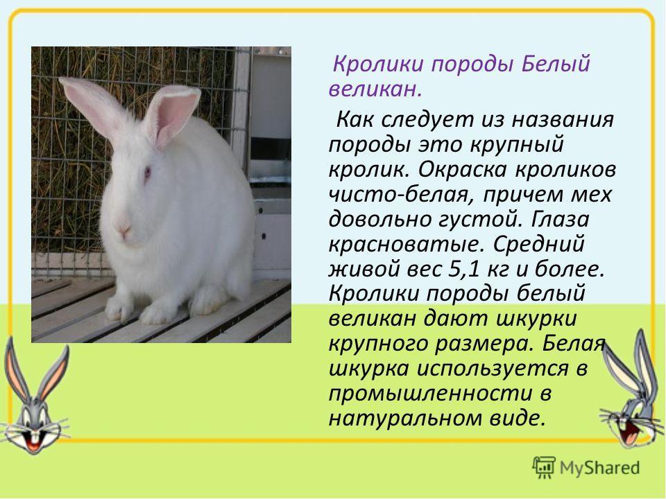 Кролики породы Белый великан. Как следует из названия породы это крупный кролик. Окраска кроликов чисто-белая, причем мех довольно густой. Глаза красноватые. Средний живой вес 5,1 кг и более. Кролики породы белый великан дают шкурки крупного размера.