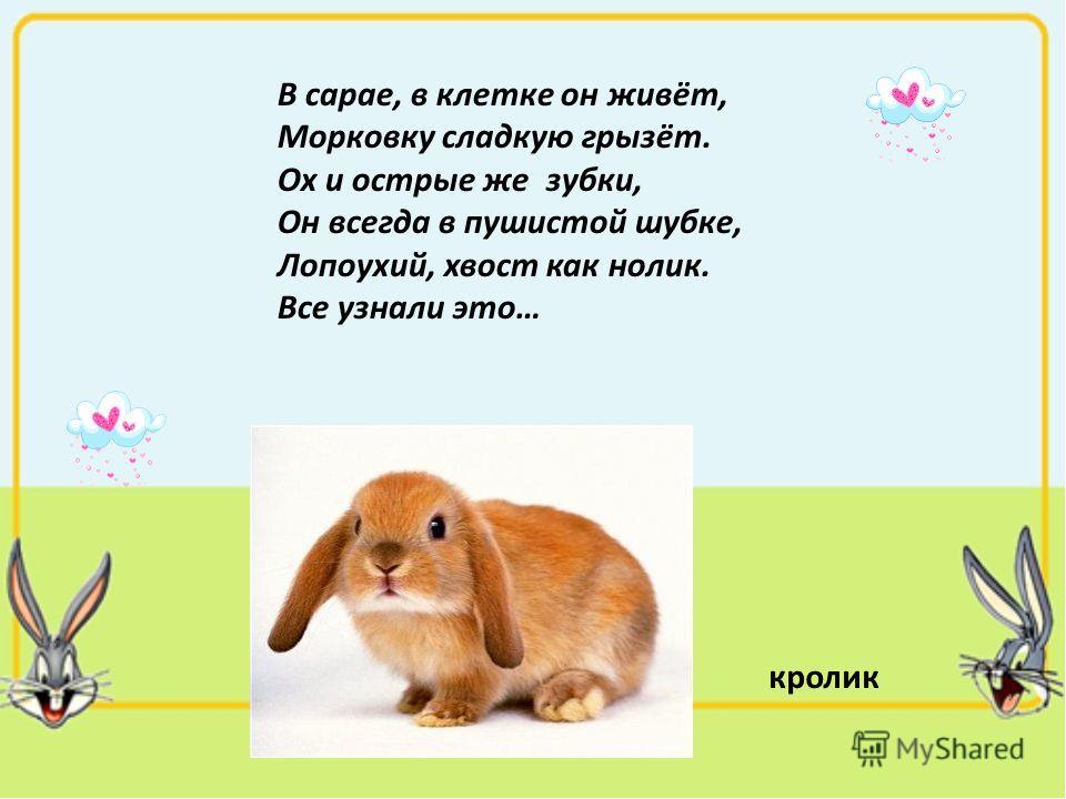 В сарае, в клетке он живёт, Морковку сладкую грызёт. Ох и острые же зубки, Он всегда в пушистой шубке, Лопоухий, хвост как нолик. Все узнали это… кролик