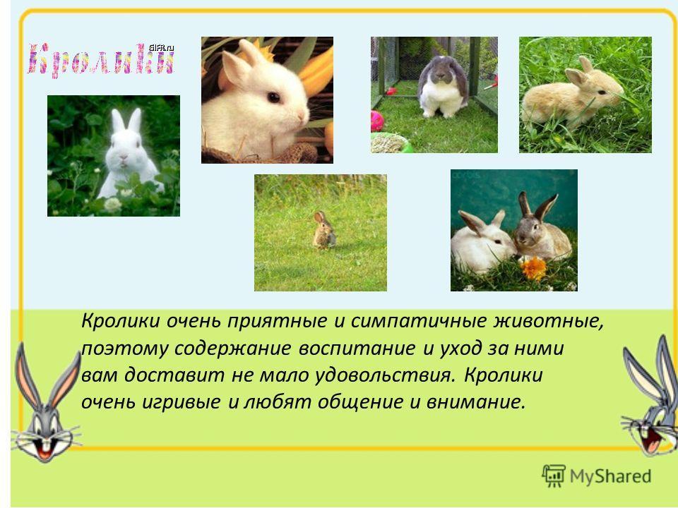 Кролики очень приятные и симпатичные животные, поэтому содержание воспитание и уход за ними вам доставит не мало удовольствия. Кролики очень игривые и любят общение и внимание.