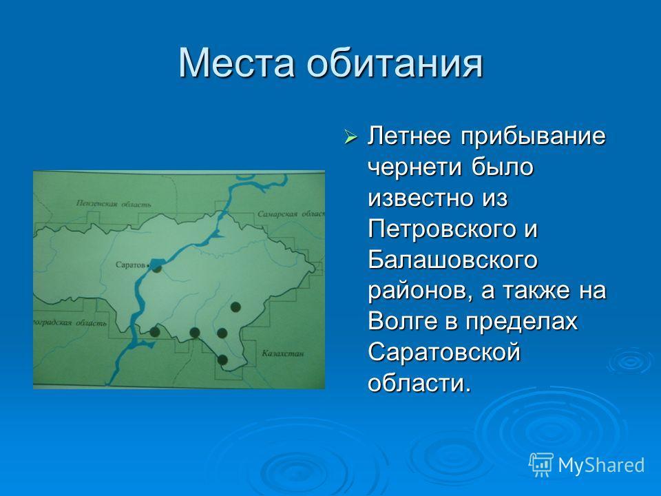 Места обитания Летнее прибывание чернети было известно из Петровского и Балашовского районов, а также на Волге в пределах Саратовской области. Летнее прибывание чернети было известно из Петровского и Балашовского районов, а также на Волге в пределах