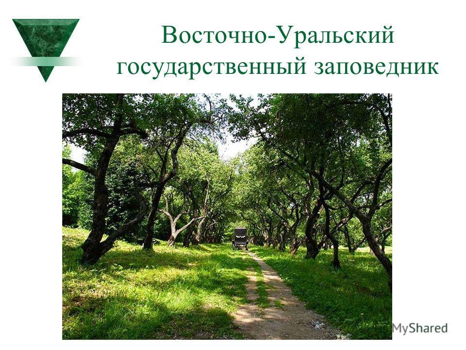 Восточно-Уральский государственный заповедник
