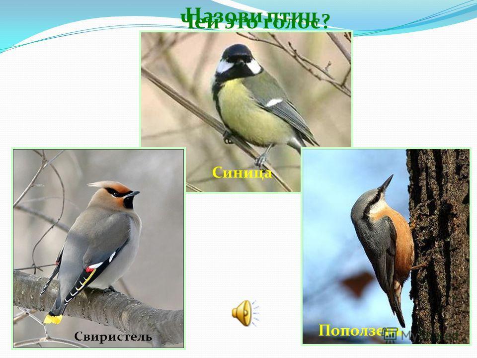 Какая из птиц выводит птенцов зимой? Сойка Снегирь Клест