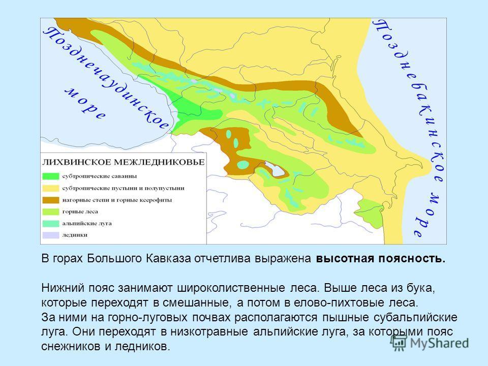 В горах Большого Кавказа отчетлива выражена высотная поясность. Нижний пояс занимают широколиственные леса. Выше леса из бука, которые переходят в смешанные, а потом в елово-пихтовые леса. За ними на горно-луговых почвах располагаются пышные субальпи