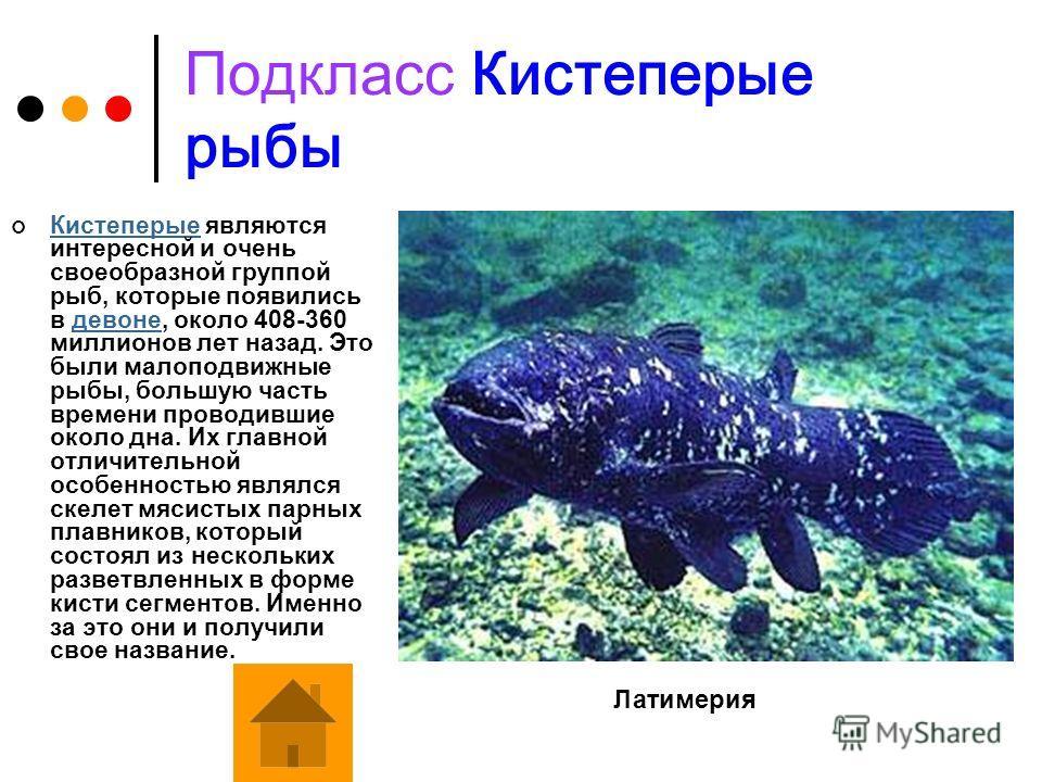 Подкласс Осетровые рыбы В отличие от остальных костных рыб, у осетровых костным является только череп, а позвоночник образован мощным хрящом.