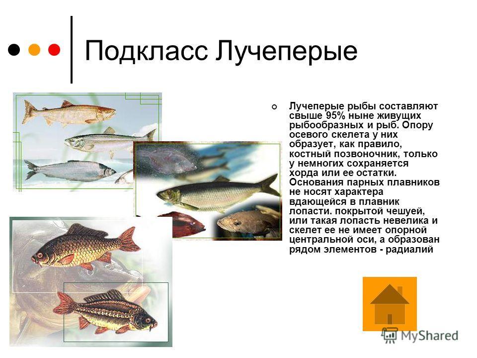 Подкласс Кистеперые рыбы Кистеперые являются интересной и очень своеобразной группой рыб, которые появились в девоне, около 408-360 миллионов лет назад. Это были малоподвижные рыбы, большую часть времени проводившие около дна. Их главной отличительно