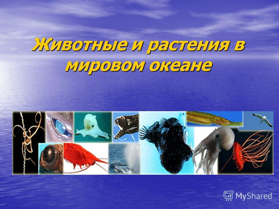 Животные и растения в мировом океане