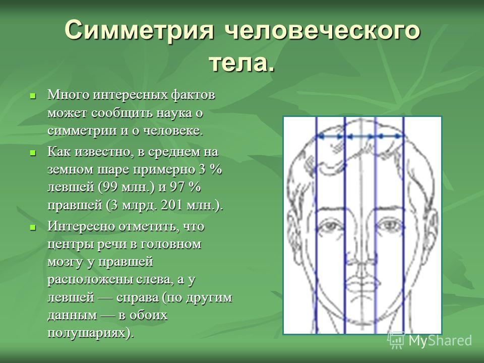 Симметрия человеческого тела. Много интересных фактов может сообщить наука о симметрии и о человеке. Много интересных фактов может сообщить наука о симметрии и о человеке. Как известно, в среднем на земном шаре примерно 3 % левшей (99 млн.) и 97 % пр