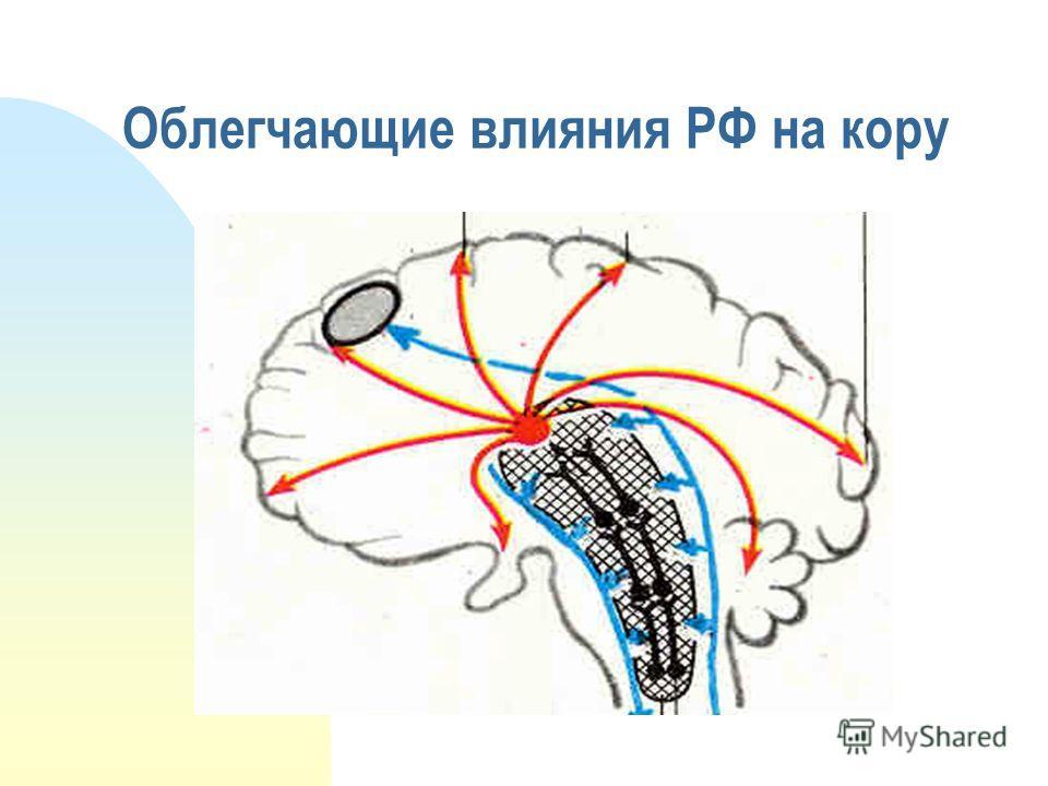 Облегчающие влияния РФ на кору