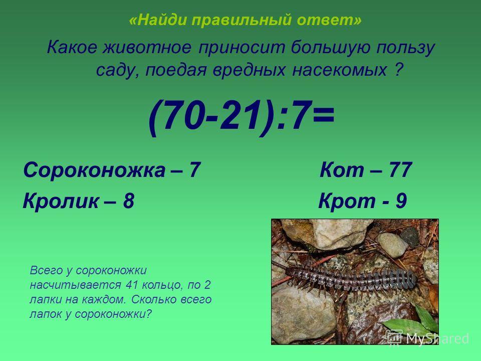 «Найди правильный ответ» Какое животное приносит большую пользу саду, поедая вредных насекомых ? (70-21):7= Сороконожка – 7 Кот – 77 Кролик – 8 Крот - 9 Всего у сороконожки насчитывается 41 кольцо, по 2 лапки на каждом. Сколько всего лапок у сороконо