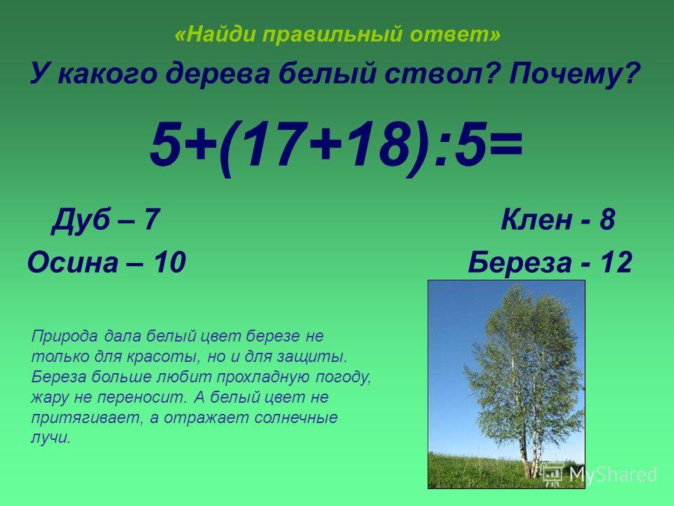 «Найди правильный ответ» У какого дерева белый ствол? Почему? 5+(17+18):5= Дуб – 7 Клен - 8 Осина – 10 Береза - 12 Природа дала белый цвет березе не только для красоты, но и для защиты. Береза больше любит прохладную погоду, жару не переносит. А белы