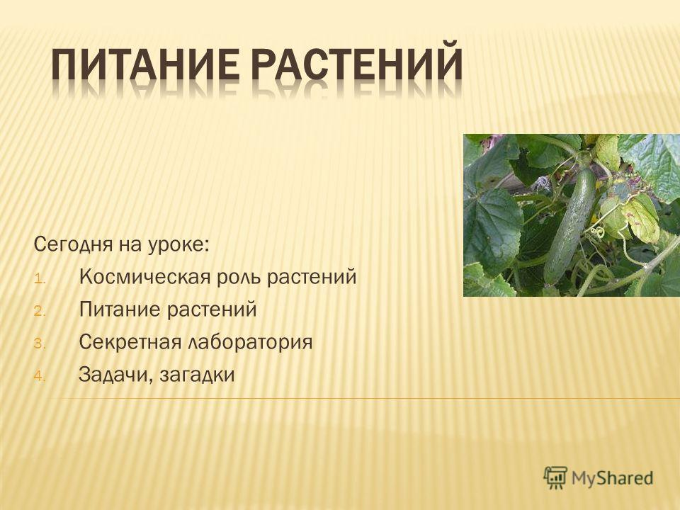 Роль растений 2 питание растений