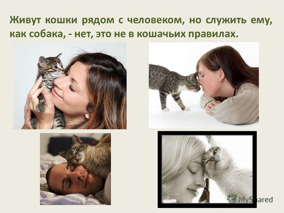 Живут кошки рядом с человеком, но служить ему, как собака, - нет, это не в кошачьих правилах.