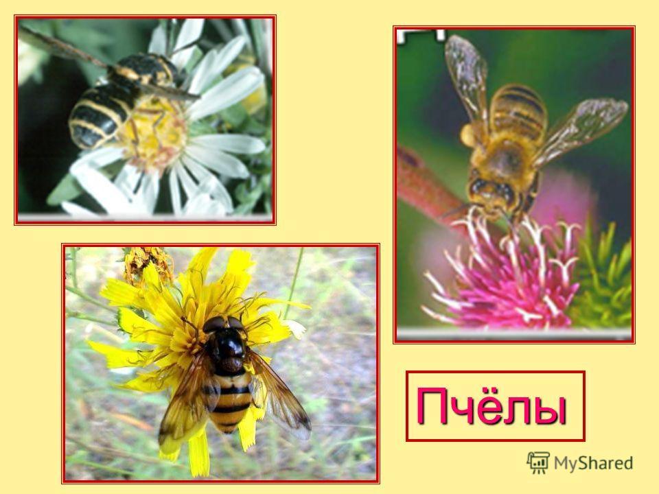 Разведение пчёл для получения мёда, воска, пчелиного яда, прополиса, а также для опыления сельскохозяйствен ных растений. Пчеловодство