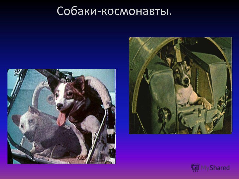 Собаки-космонавты.