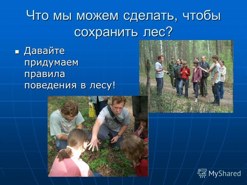 Что мы можем сделать, чтобы сохранить лес? Давайте придумаем правила поведения в лесу! Давайте придумаем правила поведения в лесу!