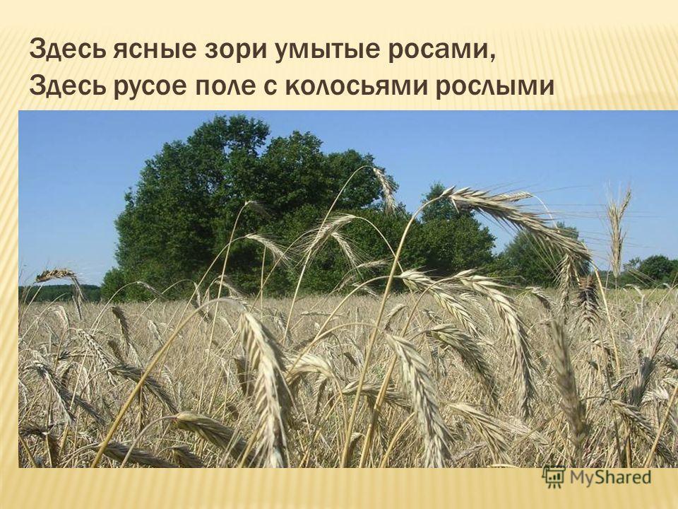 Здесь ясные зори умытые росами, Здесь русое поле с колосьями рослыми