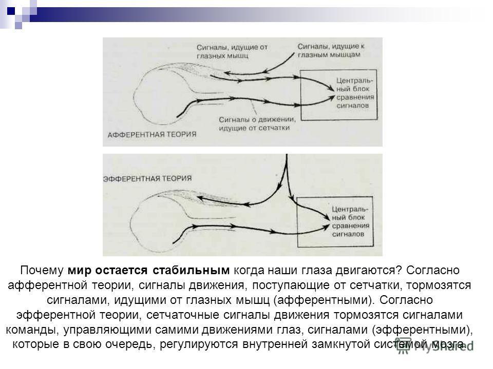 Почему мир остается стабильным когда наши глаза двигаются? Согласно афферентной теории, сигналы движения, поступающие от сетчатки, тормозятся сигналами, идущими от глазных мышц (афферентными). Согласно эфферентной теории, сетчаточные сигналы движения
