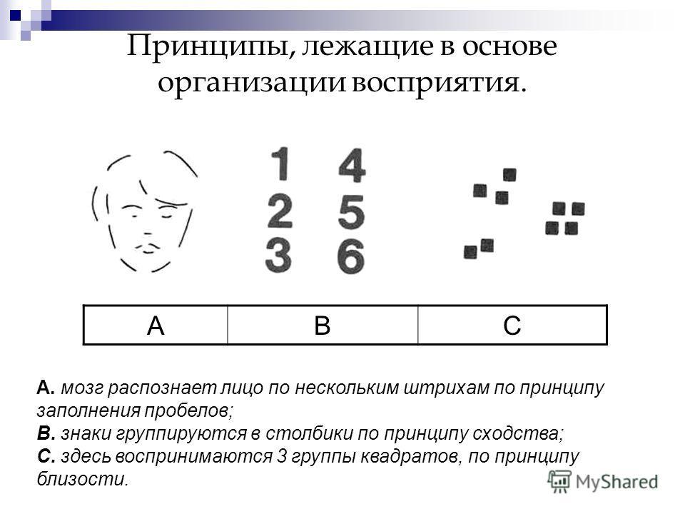 Принципы, лежащие в основе организации восприятия. АВС А. мозг распознает лицо по нескольким штрихам по принципу заполнения пробелов; В. знаки группируются в столбики по принципу сходства; С. здесь воспринимаются 3 группы квадратов, по принципу близо