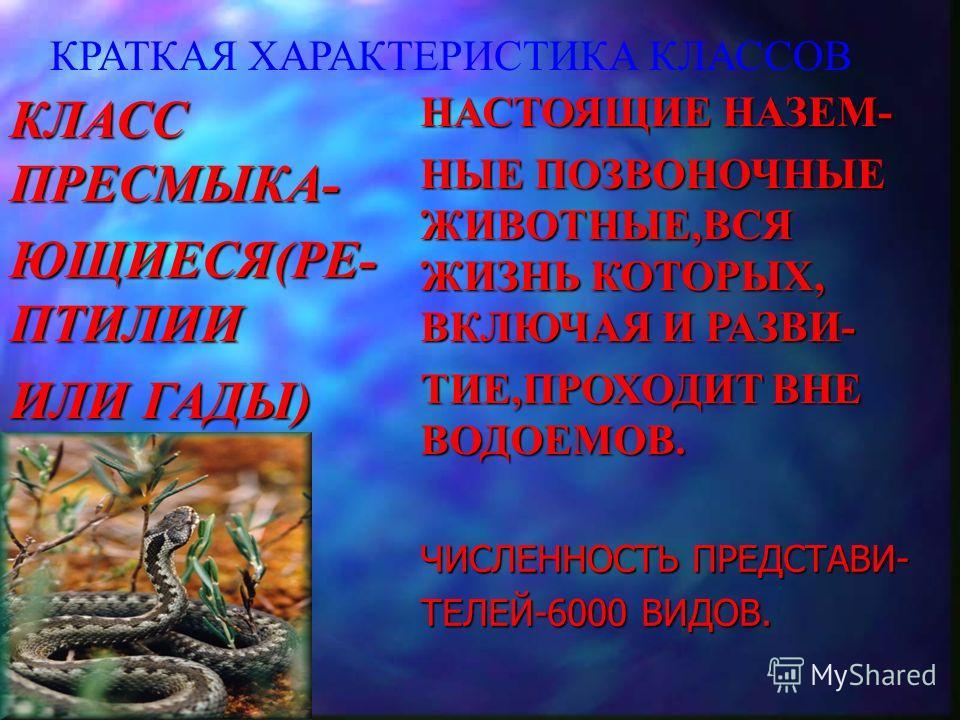КРАТКАЯ ХАРАКТЕРИСТИКА КЛАССОВ КЛАСС ПРЕСМЫКА- ЮЩИЕСЯ(РЕ- ПТИЛИИ ИЛИ ГАДЫ) НАСТОЯЩИЕ НАЗЕМ- НЫЕ ПОЗВОНОЧНЫЕ ЖИВОТНЫЕ,ВСЯ ЖИЗНЬ КОТОРЫХ, ВКЛЮЧАЯ И РАЗВИ- ТИЕ,ПРОХОДИТ ВНЕ ВОДОЕМОВ. ЧИСЛЕННОСТЬ ПРЕДСТАВИ- ТЕЛЕЙ-6000 ВИДОВ.