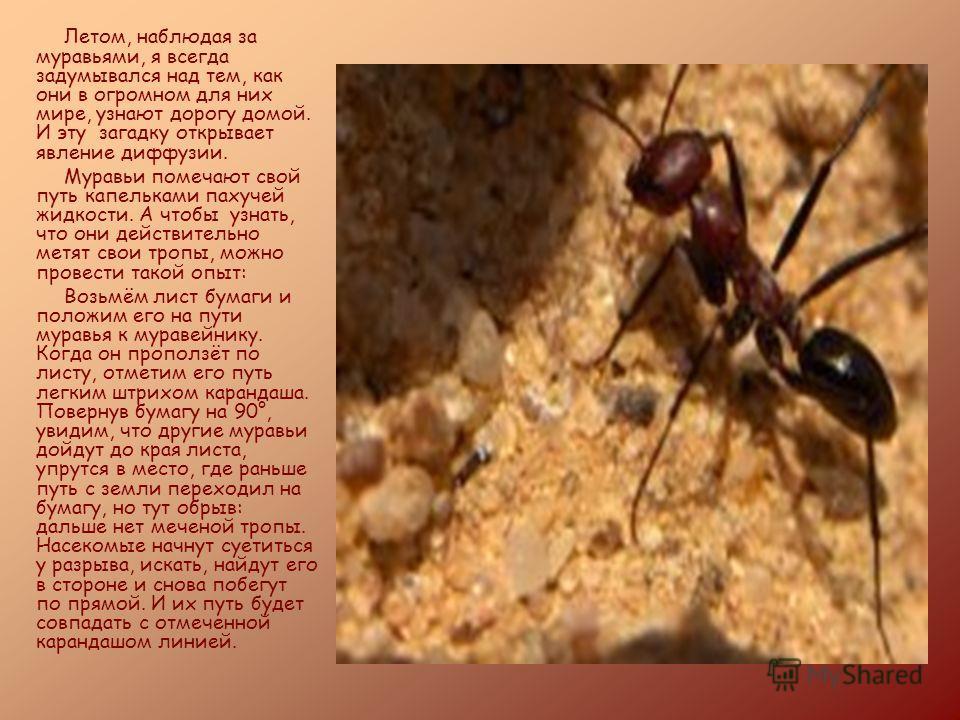 Летом, наблюдая за муравьями, я всегда задумывался над тем, как они в огромном для них мире, узнают дорогу домой. И эту загадку открывает явление диффузии. Муравьи помечают свой путь капельками пахучей жидкости. А чтобы узнать, что они действительно