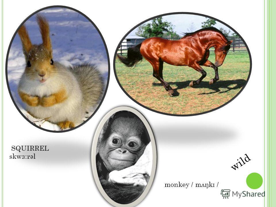HARE / he ə / WOLF / w ʋ lf / FOX / f ɒ ks / Wild