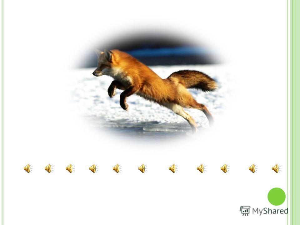 SQUIRREL skw ɜ :r ə l monkey / m ʌ ŋk ɪ / wild