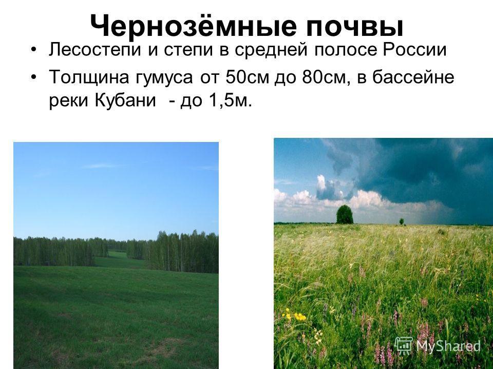 Чернозёмные почвы Лесостепи и степи в средней полосе России Толщина гумуса от 50см до 80см, в бассейне реки Кубани - до 1,5м.