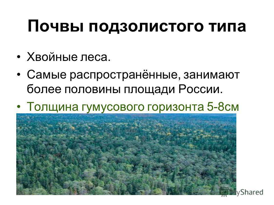 Почвы подзолистого типа Хвойные леса. Самые распространённые, занимают более половины площади России. Толщина гумусового горизонта 5-8см