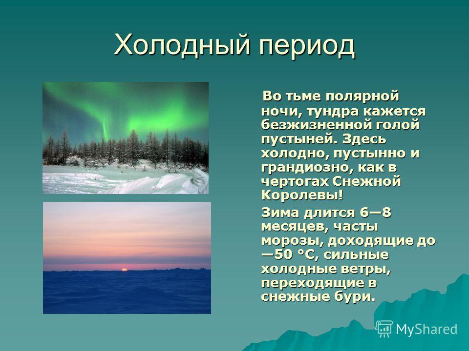 Холодный период Во тьме полярной ночи, тундра кажется безжизненной голой пустыней. Здесь холодно, пустынно и грандиозно, как в чертогах Снежной Королевы! Во тьме полярной ночи, тундра кажется безжизненной голой пустыней. Здесь холодно, пустынно и гра
