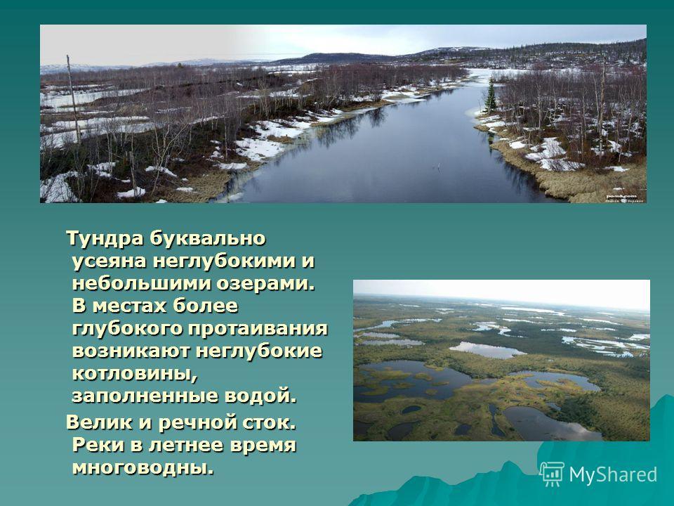 Тундра буквально усеяна неглубокими и небольшими озерами. В местах более глубокого протаивания возникают неглубокие котловины, заполненные водой. Тундра буквально усеяна неглубокими и небольшими озерами. В местах более глубокого протаивания возникают