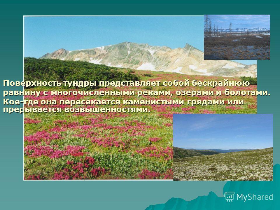 Поверхность тундры представляет собой бескрайнюю равнину с многочисленными реками, озерами и болотами. Кое-где она пересекается каменистыми грядами или прерывается возвышенностями.