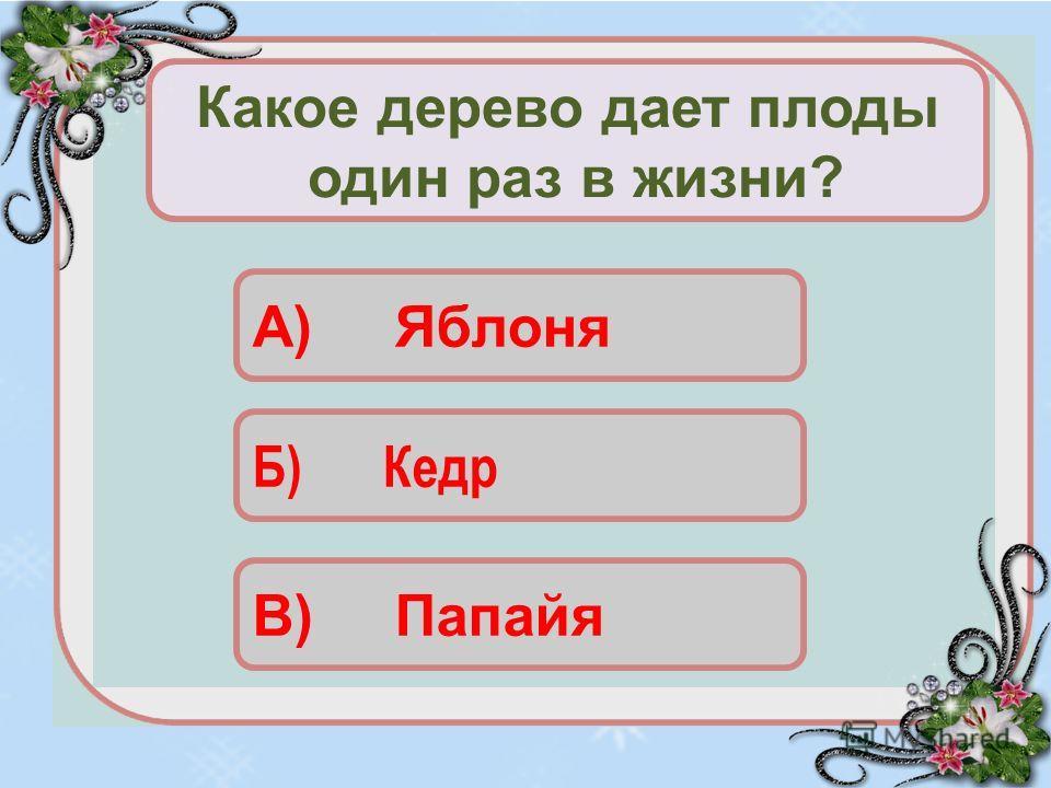 Б) Кедр В) Папайя Какое дерево дает плоды один раз в жизни? А) Яблоня