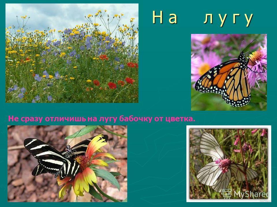 Н а л у г у Не сразу отличишь на лугу бабочку от цветка.