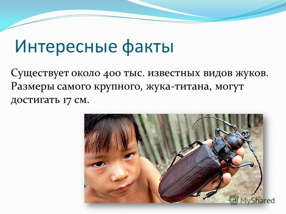Интересные факты Существует около 400 тыс. известных видов жуков. Размеры самого крупного, жука-титана, могут достигать 17 см.