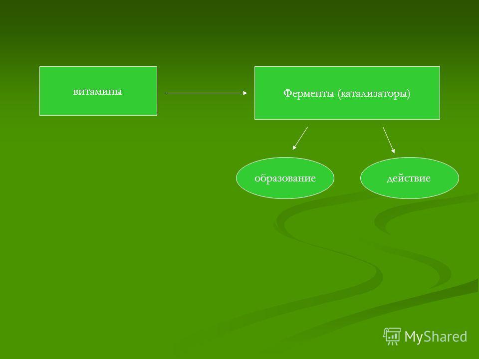 витамины Ферменты (катализаторы) образованиедействие