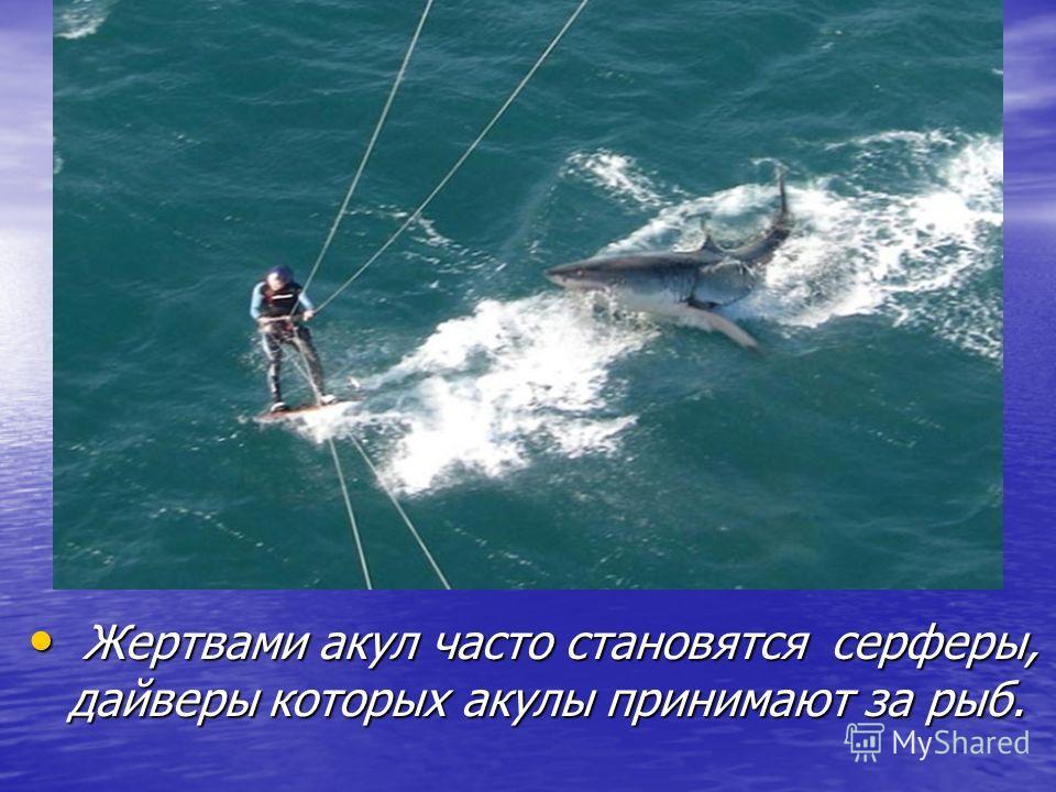 Жертвами акул часто становятся серферы, дайверы которых акулы принимают за рыб. Жертвами акул часто становятся серферы, дайверы которых акулы принимают за рыб.