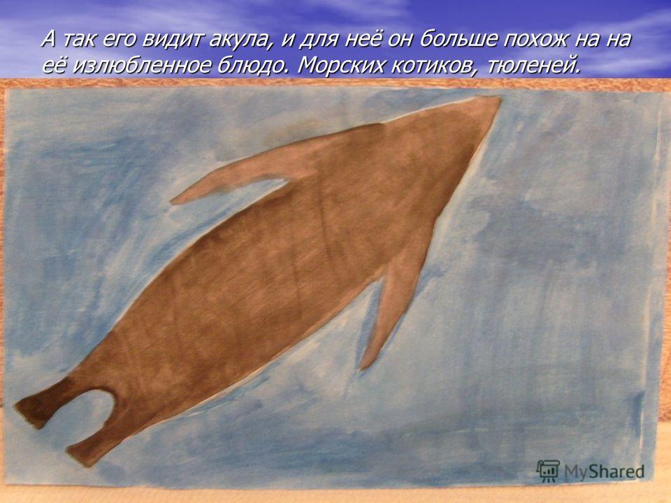 А так его видит акула, и для неё он больше похож на на её излюбленное блюдо. Морских котиков, тюленей.
