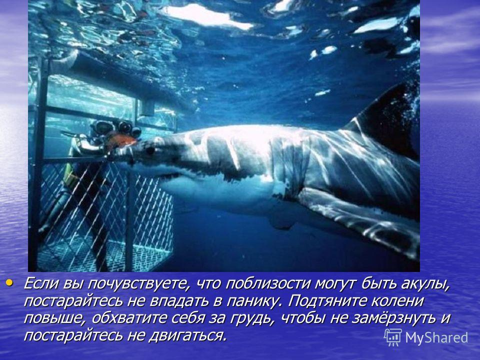 Если вы почувствуете, что поблизости могут быть акулы, постарайтесь не впадать в панику. Подтяните колени повыше, обхватите себя за грудь, чтобы не замёрзнуть и постарайтесь не двигаться. Если вы почувствуете, что поблизости могут быть акулы, постара