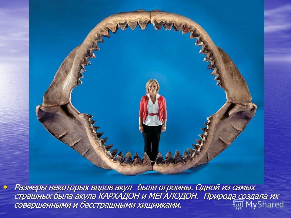Размеры некоторых видов акул были огромны. Одной из самых страшных была акула КАРХАДОН и МЕГАЛОДОН. Природа создала их совершенными и бесстрашными хищниками. Размеры некоторых видов акул были огромны. Одной из самых страшных была акула КАРХАДОН и МЕГ