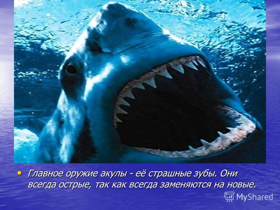 Главное оружие акулы - её страшные зубы. Они всегда острые, так как всегда заменяются на новые. Главное оружие акулы - её страшные зубы. Они всегда острые, так как всегда заменяются на новые.