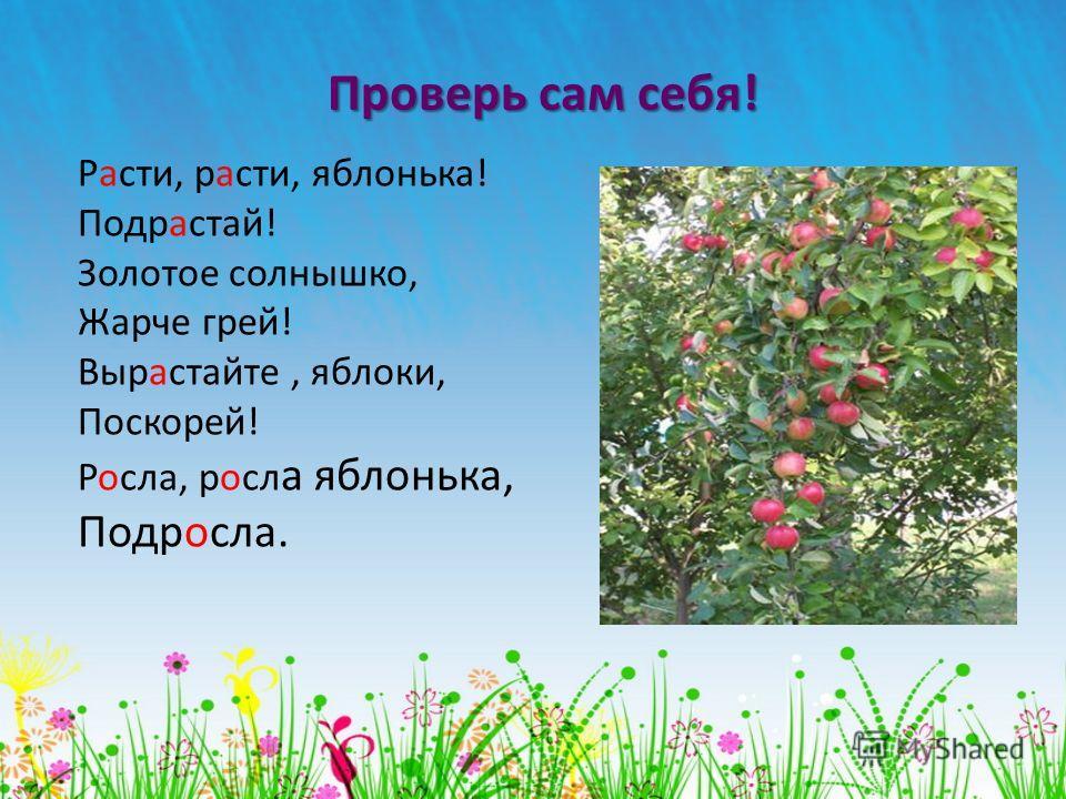 Проверь сам себя! Расти, расти, яблонька! Подрастай! Золотое солнышко, Жарче грей! Вырастайте, яблоки, Поскорей! Росла, росл а яблонька, Подросла.