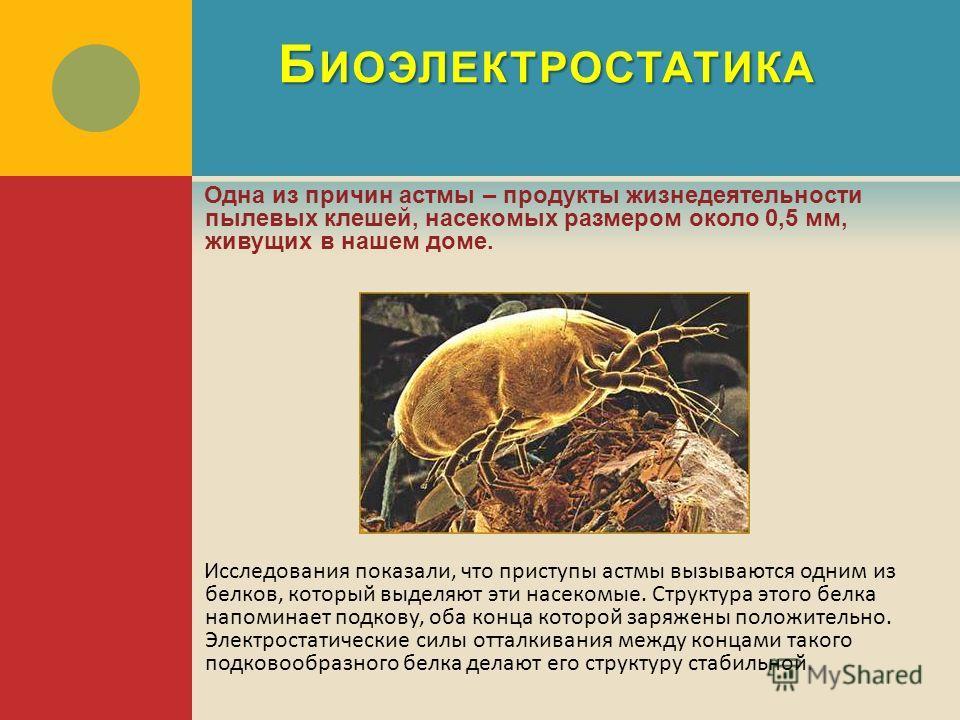 Б ИОЭЛЕКТРОСТАТИКА Одна из причин астмы – продукты жизнедеятельности пылевых клешей, насекомых размером около 0,5 мм, живущих в нашем доме. Исследования показали, что приступы астмы вызываются одним из белков, который выделяют эти насекомые. Структур