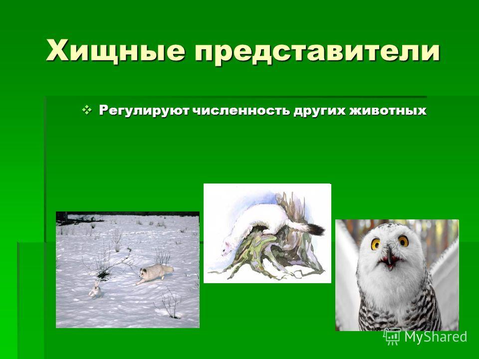 Хищные представители Регулируют численность других животных Регулируют численность других животных