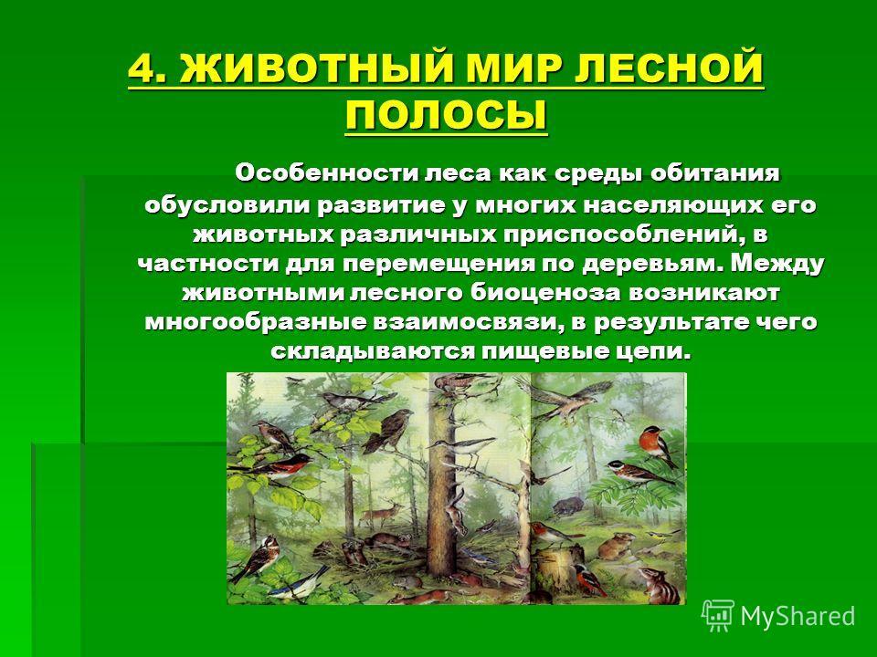 4. ЖИВОТНЫЙ МИР ЛЕСНОЙ ПОЛОСЫ Особенности леса как среды обитания обусловили развитие у многих населяющих его животных различных приспособлений, в частности для перемещения по деревьям. Между животными лесного биоценоза возникают многообразные взаимо