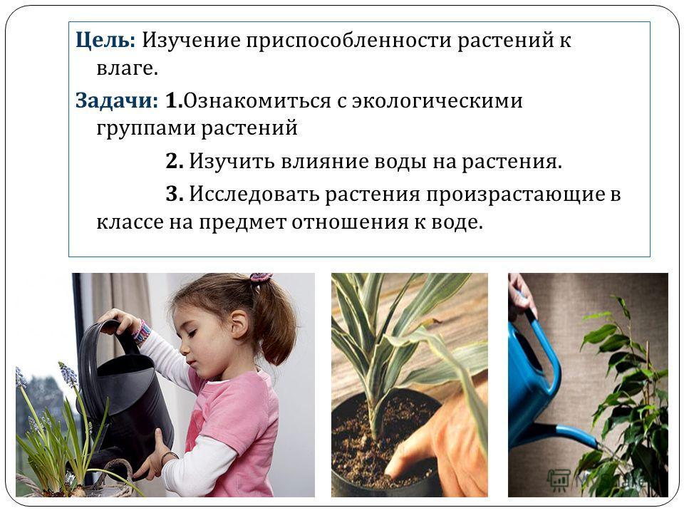 Цель : Изучение приспособленности растений к влаге. Задачи : 1. Ознакомиться с экологическими группами растений 2. Изучить влияние воды на растения. 3. Исследовать растения произрастающие в классе на предмет отношения к воде.