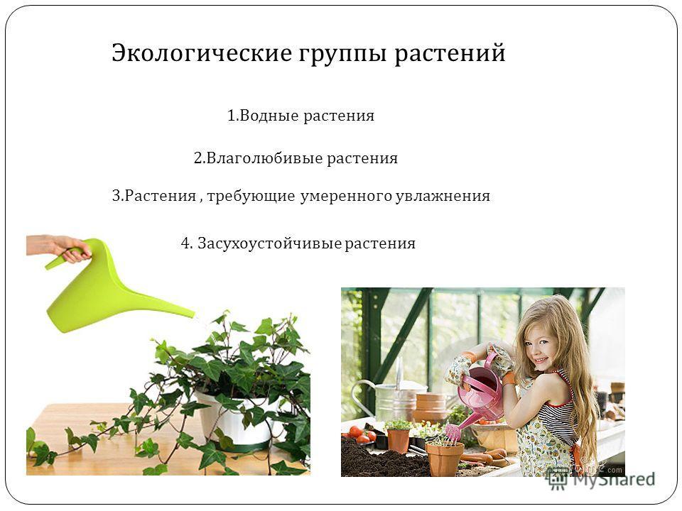 Экологические группы растений 1. Водные растения 2. Влаголюбивые растения 3. Растения, требующие умеренного увлажнения 4. Засухоустойчивые растения