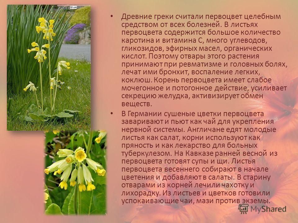 Древние греки считали первоцвет целебным средством от всех болезней. В листьях первоцвета содержится большое количество каротина и витамина С, много углеводов, гликозидов, эфирных масел, органических кислот. Поэтому отвары этого растения принимают пр