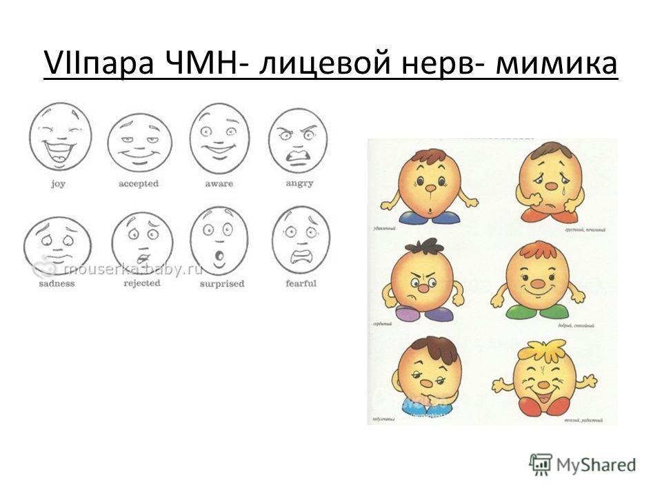VIIпара ЧМН- лицевой нерв- мимика