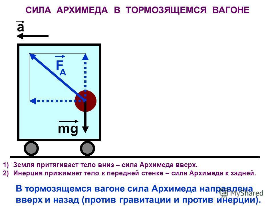 СИЛА АРХИМЕДА В ТОРМОЗЯЩЕМСЯ ВАГОНЕ F A mg a 1)Земля притягивает тело вниз – сила Архимеда вверх. 2)Инерция прижимает тело к передней стенке – сила Архимеда к задней. В тормозящемся вагоне сила Архимеда направлена вверх и назад (против гравитации и п